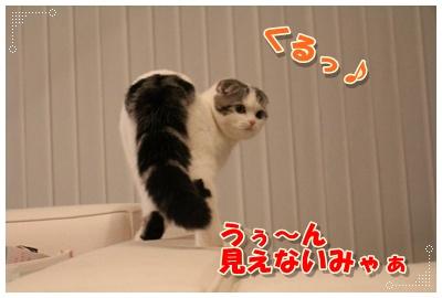 IMG_2329-001.jpg