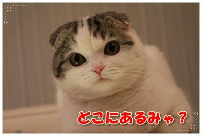 IMG_2360-004.jpg