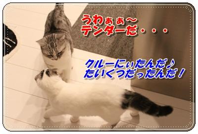 IMG_3720-001.jpg