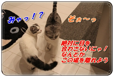 IMG_3721-002.jpg