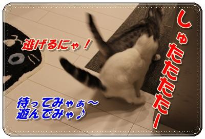 IMG_3723-004.jpg