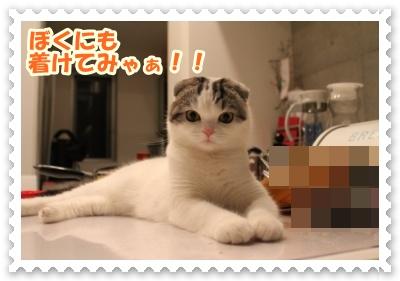 IMG_6919-004.jpg