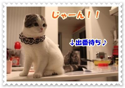 IMG_6980-001.jpg