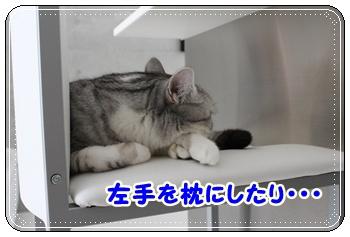 IMG_7047-003.jpg