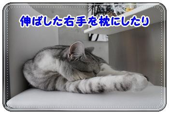IMG_7052-004.jpg