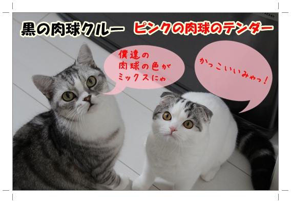 IMG_8498.jpg