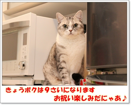 IMG_8870.jpg