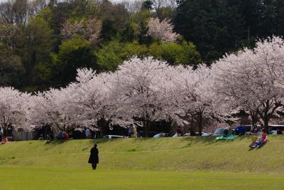 桜並木や広場