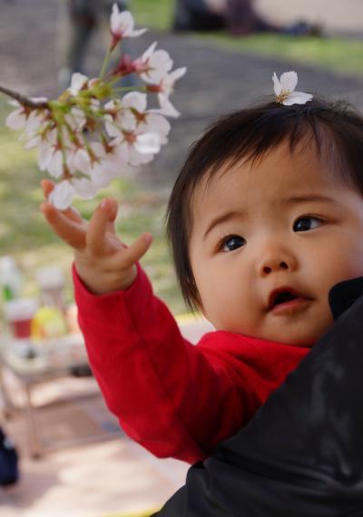 桜にも触れました