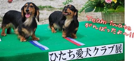 ひたち愛犬クラブ展