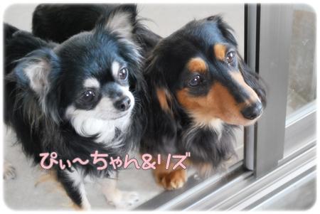 ぴぃ~ちゃん&リズ