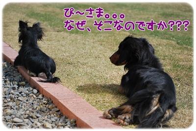 ぴーちゃん&ジャック