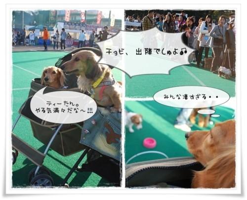 3DSC_4385.jpg