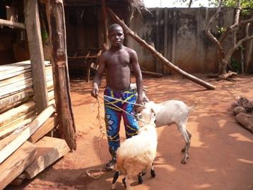 絞める前の羊