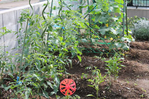 6,8家庭菜園