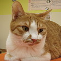 猫カフェin福島