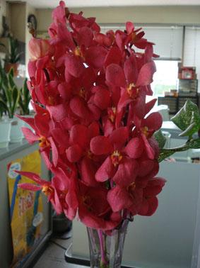 真っ赤なお花