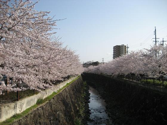 0409YAMAZAKI1.jpg