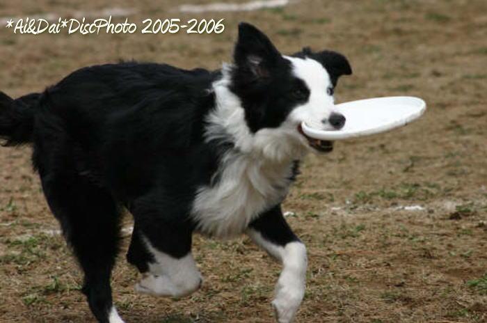 2006-03-a45.jpg