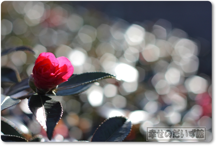 DPP_2540-064.jpg
