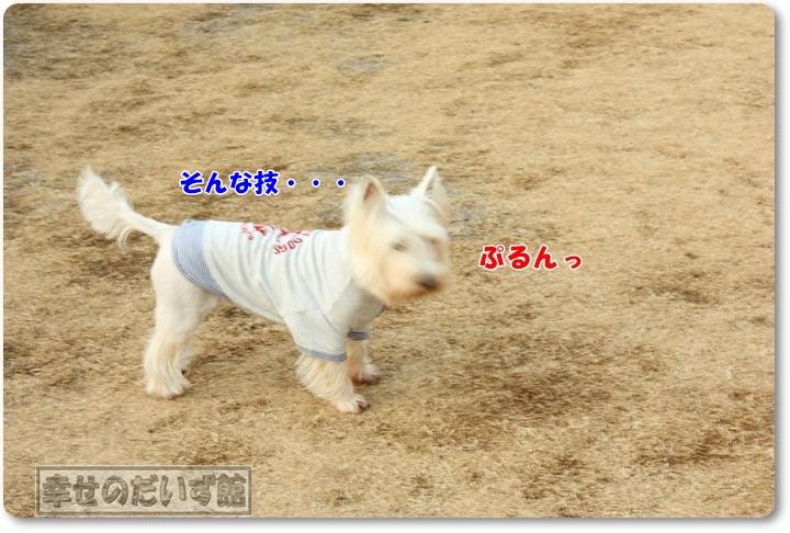DPP_2749-022.jpg