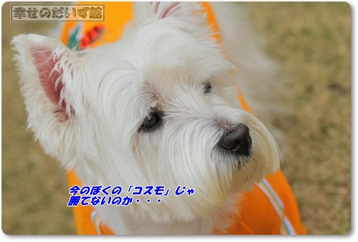 DPP_3529-017.jpg