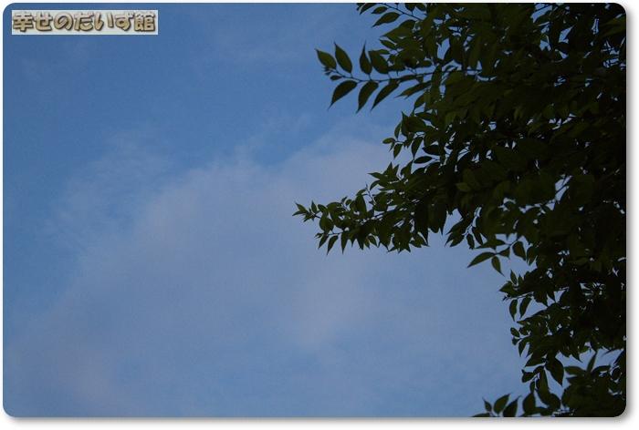 IMG_0049_20100809032859.jpg
