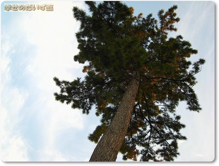 daizukan1-IMG_9560.jpg