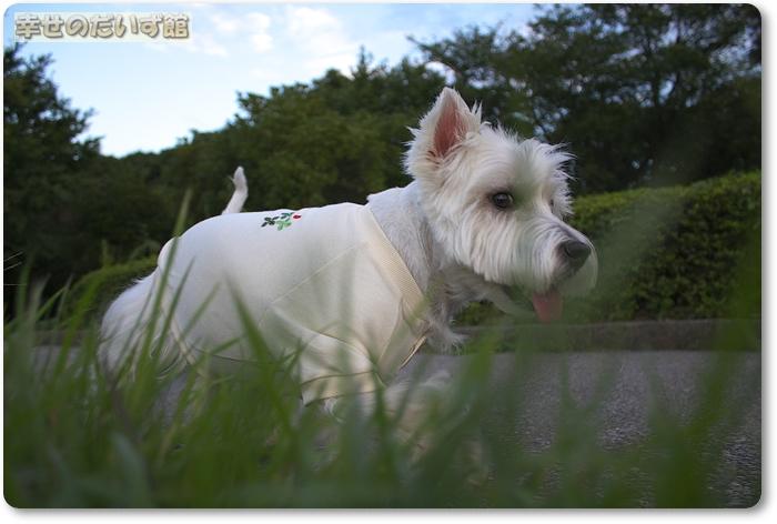 daizukan11-_MG_0148.jpg