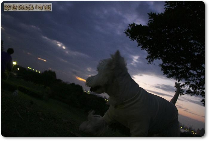 daizukan22-_MG_0261.jpg