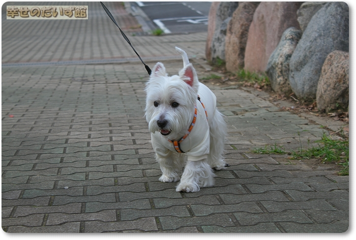 daizukan27-IMG_0023.jpg