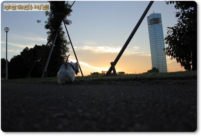 dpp-0654.jpg