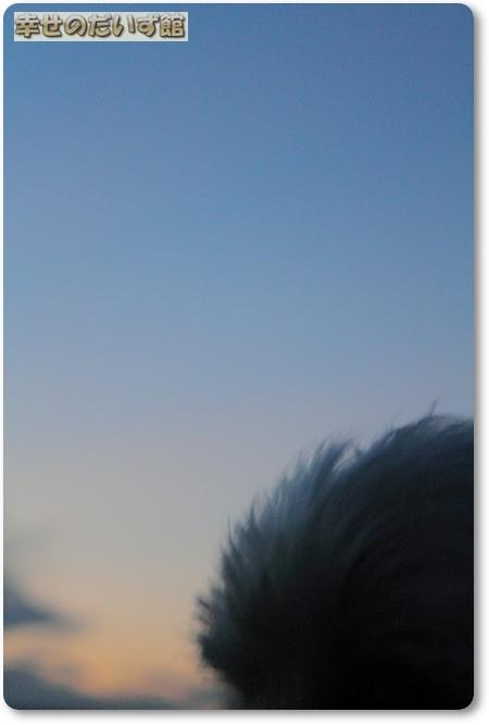 dpp-0665.jpg