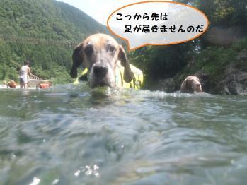 川は結構流れも速いし、深さも首まであるし