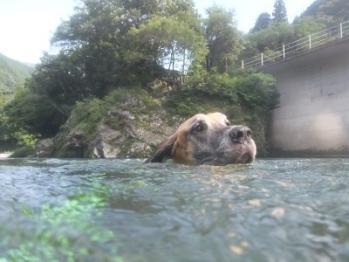 ダンの泳ぐ顔はかぁわいいなぁ。その1