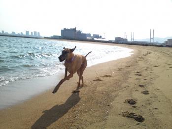 at 芦屋浜