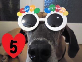 5years birthday boy