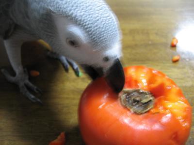 柿っておもしろいよ