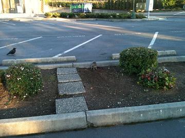 駐車場にリス