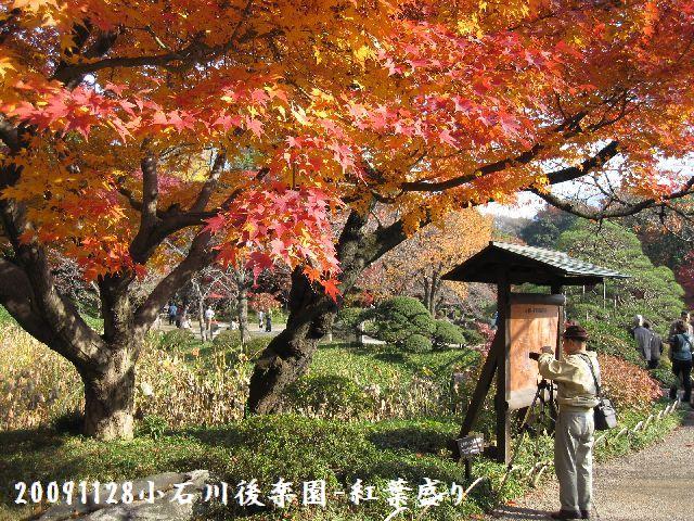 091128koishikawa01