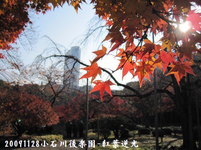 091128koishikawa02