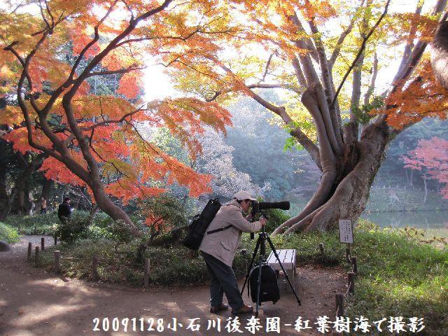 091128koishikawa06