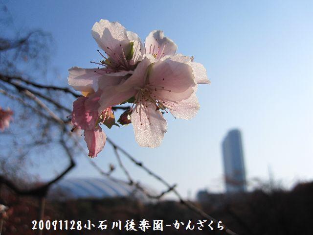 091128koishikawa11