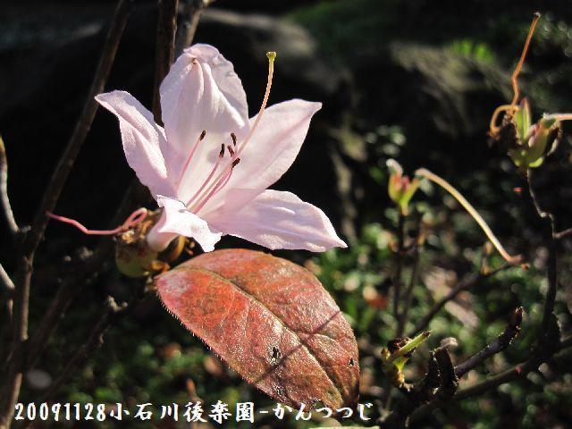 091128koishikawa12