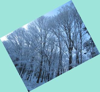 12月8日雪景色