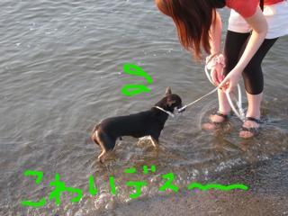 snap_denmami_201091123512.jpg