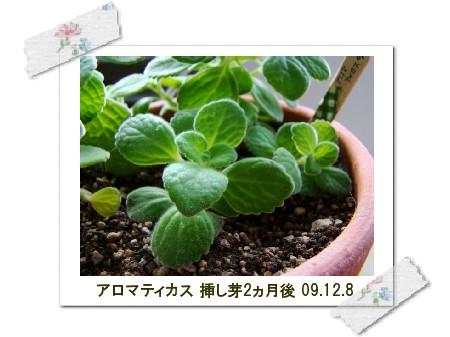 DSC09056-2.jpg