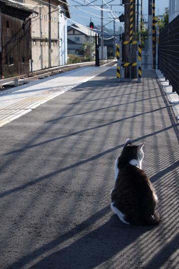 20091011_inashi-06.jpg
