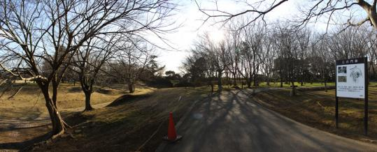 20100116_sakura_castle-09.jpg