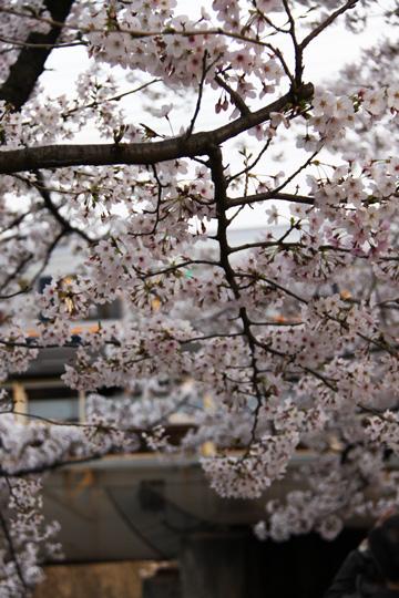 20100404_shukugawa_park-02.jpg
